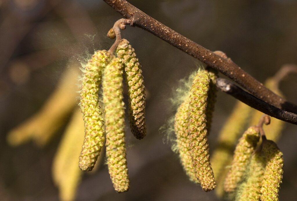polen biljaka